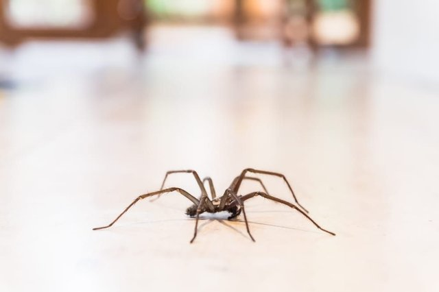 A fear of spiders could be the result of human evolution (Photo: Shutterstock)