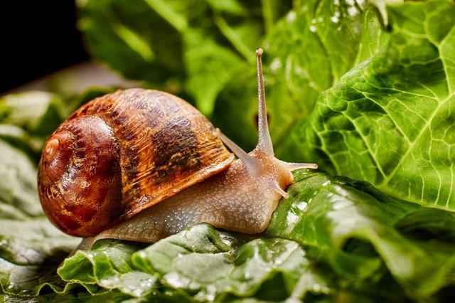 Do you have problems with slugs and snails in your garden? (Photo: Shutterstock)