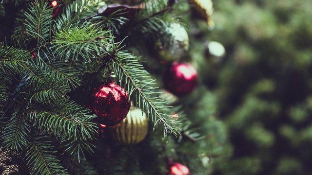 How to recycle your Christmas tree and where to take it in Hartlepool