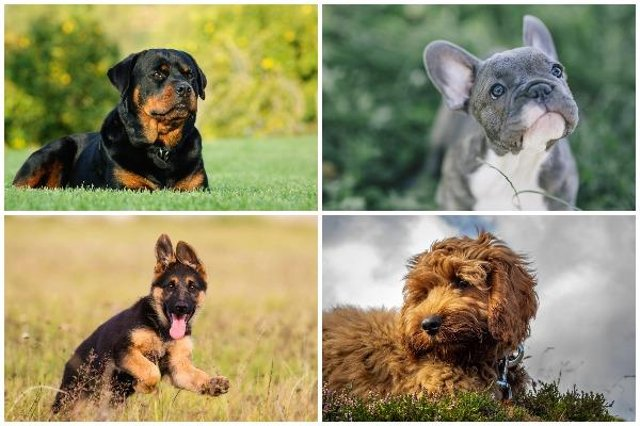 Dogs (Photo: Shutterstock)