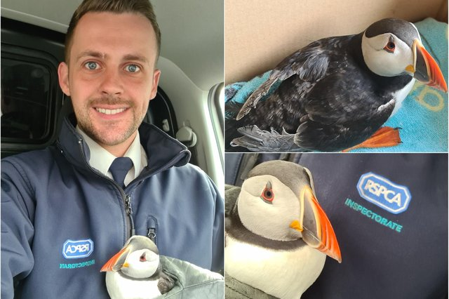 The RSPCA have rescued and released a puffin which was found in a country lane in County Durham.