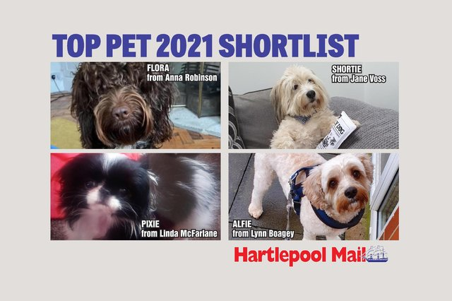 Who will get your vote to be crowned Hartlepool Mail Top Pet champion?