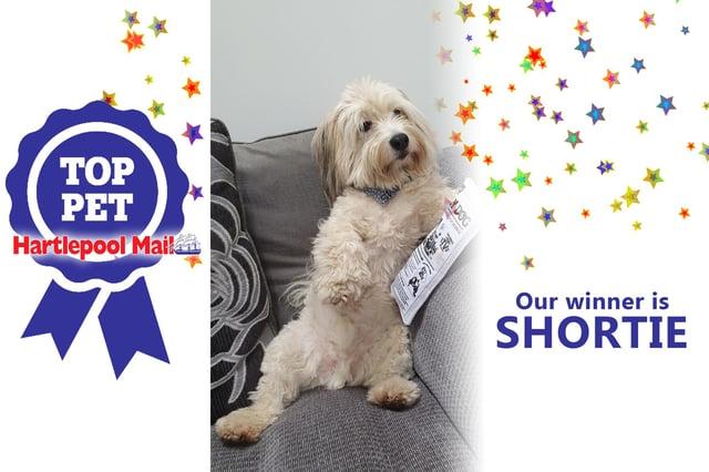 Shortie is our Top Pet winner!