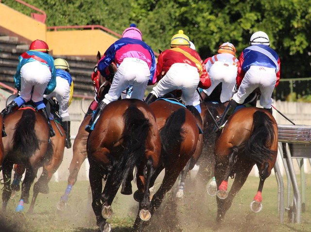 Horses get a bum deal from racing...